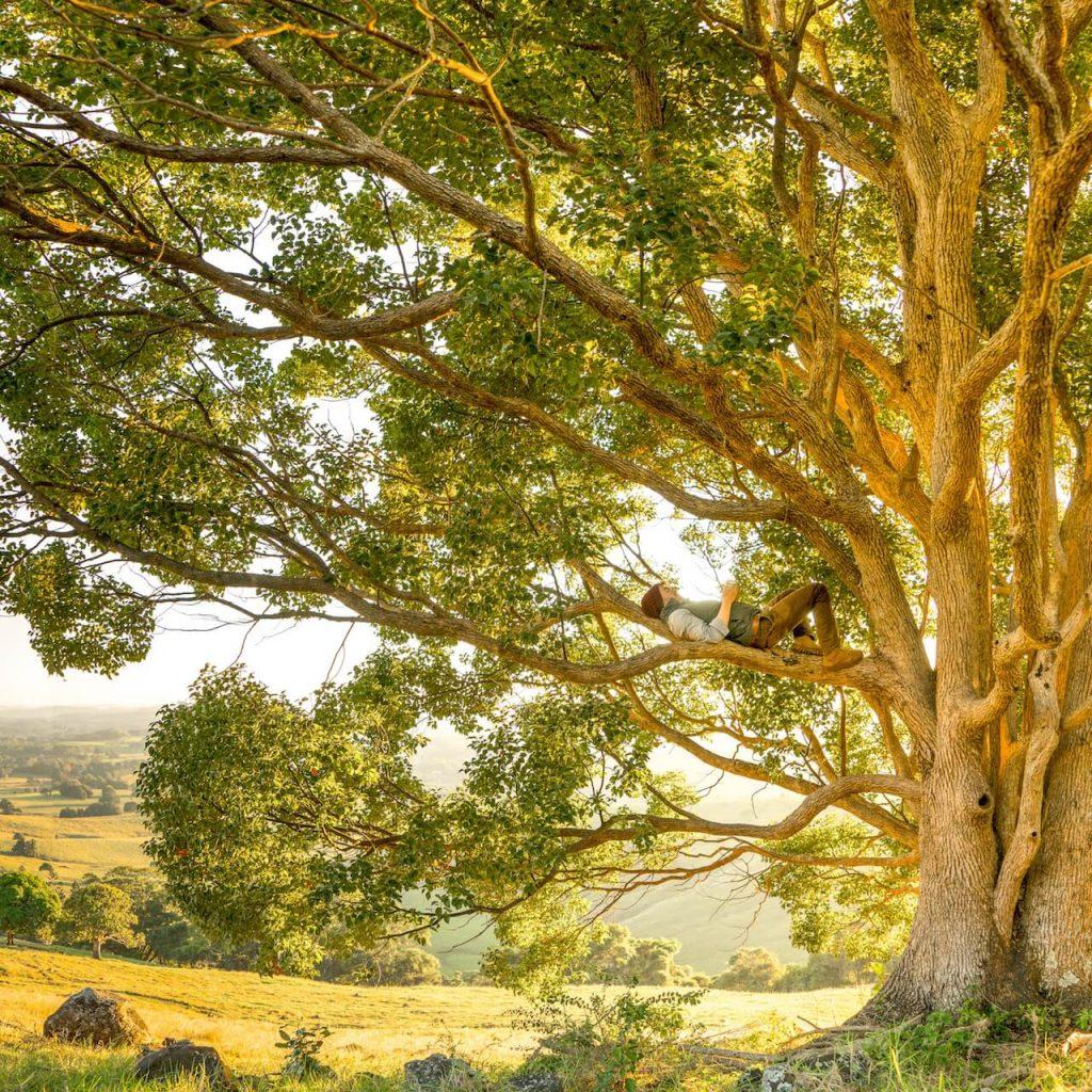 Social-Media-Marketing: Informationsfluss so natürlich wie ein Baum mit vielen Ästen